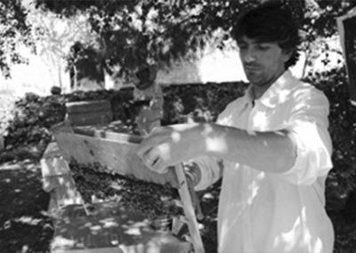 Savino Petruzzelli - Apicoltore Mielizia