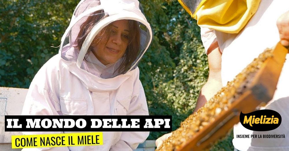 Come nasce il miele. Alla scoperta di Mielizia con Sonia Peronaci