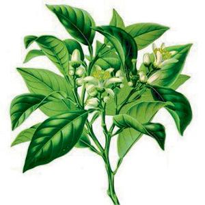 miele monoflora tiglio